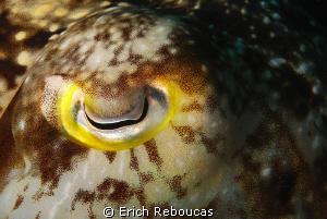 Cuttlefish Eye Shot by Erich Reboucas