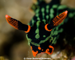 lembeh by Rene Braband Andersen