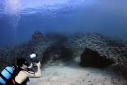 Big Eyed Scad 2, Laulau Bay, Saipan MP by Martin Dalsaso