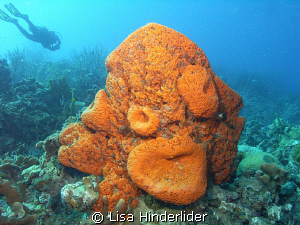 The brightness of the sponges & the different shapes they... by Lisa Hinderlider