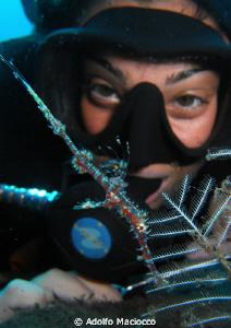 Juvenile  ornate ghostpipefish & diver by Adolfo Maciocco