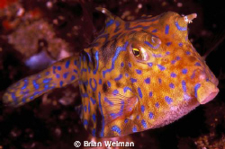 What's Up? by Brian Welman