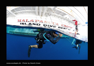 Lets go to down to watch the Thresher Sharks :) Balt is m... by Henrik Gram Rasmussen