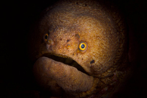 Broadband Moray by Paul Colley