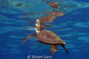 Reflections from below. by Stuart Ganz
