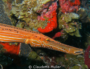 What a snout! Love the orange color of this guy! by Claudette Muller