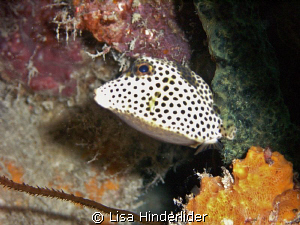 My little spotted friend! by Lisa Hinderlider