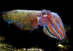 My Giant.