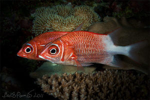 observe with two eyes