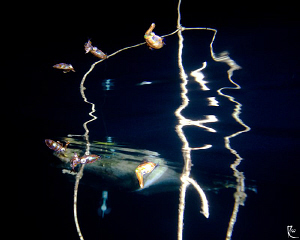 """""""Triple Reflection"""" What you see here are not 6 squids ;... by Rico Besserdich"""