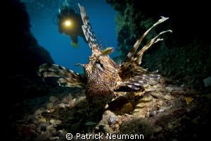 Snooted Lionfish in a cave with diver (my Dad :)) in the ... by Patrick Neumann