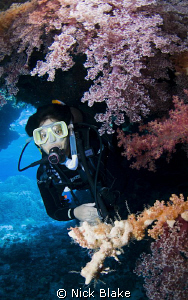 Diver and soft corals St Johns, Red Sea by Nick Blake