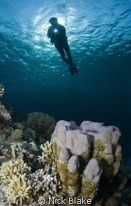 Diver over Reef, St Johns, Red Sea. by Nick Blake