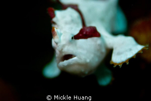 I CAN FLY !