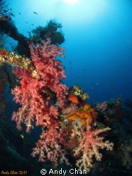 Tulamben Shipwreck - Bali Canon S95 + UWL 04_Fisheye Len... by Andy Chan
