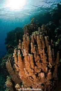 Pillar Corals by Erich Reboucas
