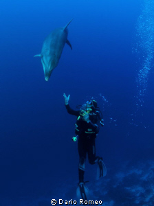 Dolphin and UW photographer (Tursiops truncatus). The Di... by Dario Romeo