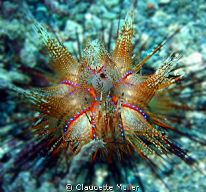 """""""OUCH!"""" The spines from these REALLY hurt! by Claudette Muller"""