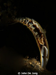 Snoot close up of a mussel, last weekend. by John De Jong