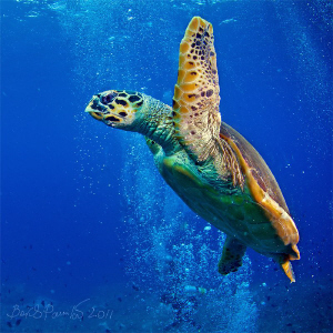 I need a gulp of fresh air...