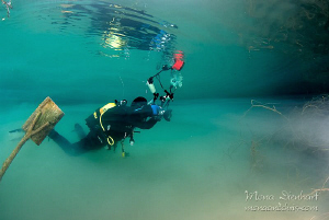 this was one of the weirdest dives I've ever had. Fernste... by Mona Dienhart