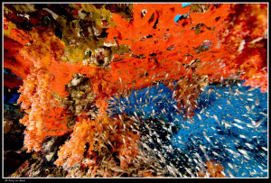 Abstract (corals sponges and glassfish) by Dray Van Beeck