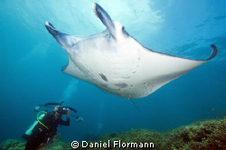 Manta photographer by Daniel Flormann