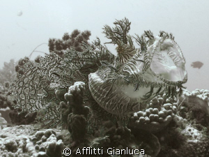 rinophia by Afflitti Gianluca