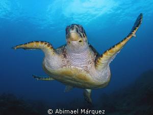 The turtle flight by Abimael Márquez