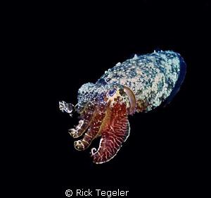 Night cuttle.  Enjoy! by Rick Tegeler