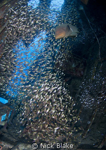 Glass fish congregate inside the cabin of a yacht wreck, ... by Nick Blake