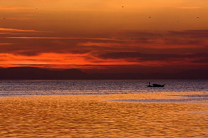"""""""Sea of gold"""" While sunset light turns the water surface... by Rico Besserdich"""
