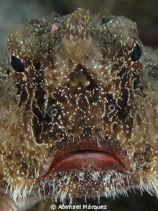 The face of a Batfish. by Abimael Márquez
