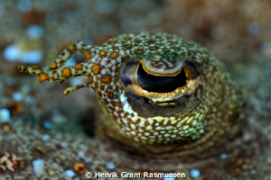 Eye of the flounder :) by Henrik Gram Rasmussen