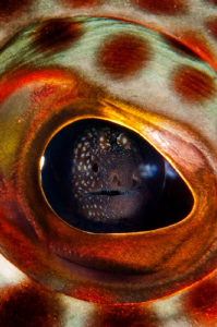 In the eye of the beholder: Ascension Island Grouper eyeb... by Paul Colley