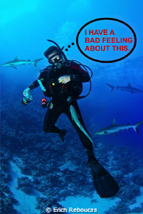A Remora stuck to your leg...  Hmmm, I have a bad feelin... by Erich Reboucas
