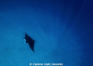 snorkeling feeling by Cipriano (ripli) Gonzalez