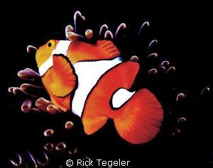 Nemo by Rick Tegeler