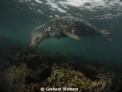 A Seal taken at the Farn Islands in the UK by Graham Watters