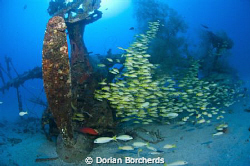 """A Coral Cod at the """"Deep Pete"""". by Dorian Borcherds"""
