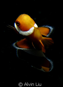 I shoot This Nemo Fish while safety stop with my Canon G12 by Alvin Liu