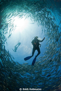 To Dive or to Snorkel... that is the question by Erich Reboucas
