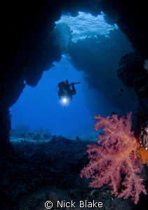 Soft corals in the St Johns Caves, Red Sea South. by Nick Blake