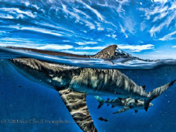"Reef sharks or as they are known with affection as ""Ankle... by Mike Ellis"