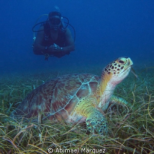 Willy and the Green Turtle. by Abimael Márquez