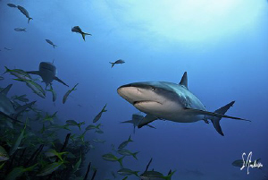 This image was taken last year while diving at Hammertime... by Steven Anderson