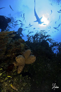 This image was taken while moving up off edge of the reef... by Steven Anderson