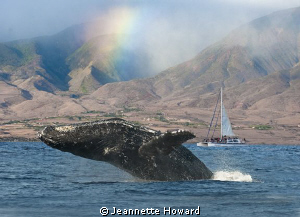 Rainbow Breach on Maui by Jeannette Howard