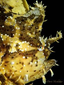 Sargassum in the ocean by Doris Vierkoetter