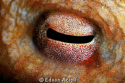Eye of octopus. by Edson Acioli
